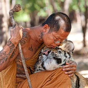 Tigermonk.jpg