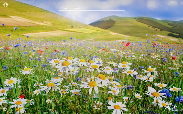 Wild Flowers HD Wallpapers New Tab Theme