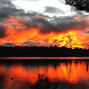 Burning Sky by Richard Moyen - Landscapes Weather ( water, pylon, tree, dark, ducks, bush, daybreak, burning, fire, sun.sunrise )