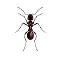 Ant Destroyer