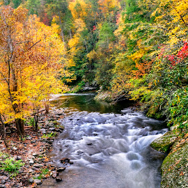 Fall Scene by John Larson - Landscapes Forests ( fall, rocks, stream, trees, colors )