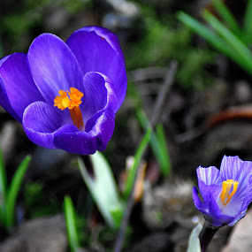 Spring  springs  up by Gordon Simpson - Flowers Flowers in the Wild