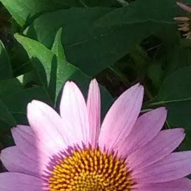 by Yvonne Collins - Flowers Single Flower