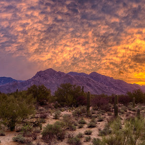 Mid Mountain by Charlie Alolkoy - Landscapes Deserts ( desert, sunset, sunrise, cactus )
