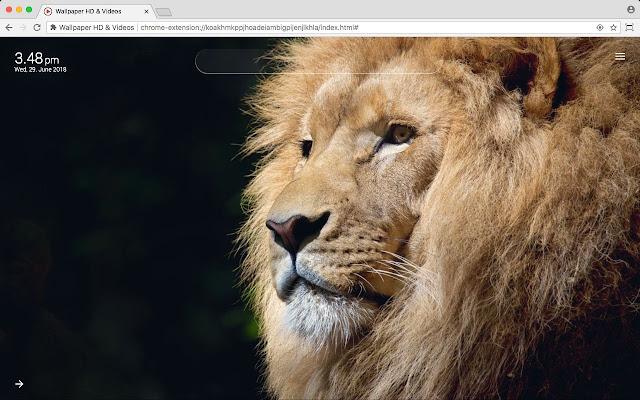 Wild animals Wallpaper HD & Videos