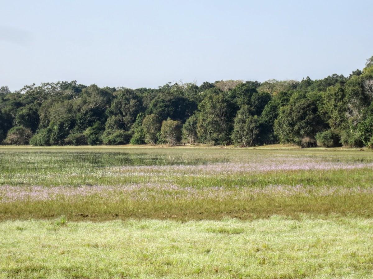 Sri. Lanka Wilpattu National Park . One of the Willa of Wilpattu?