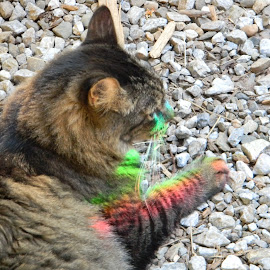 Rainbow Kitty by Sarah Farber - Animals - Cats Playing