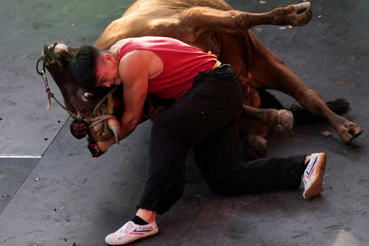 Zhong Xiaojie, 19, wrestles a bull to the ground during a bullfight in China.