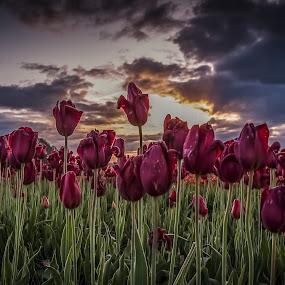Reach for the sky by Ivan Johnson - Flowers Flower Gardens (  )