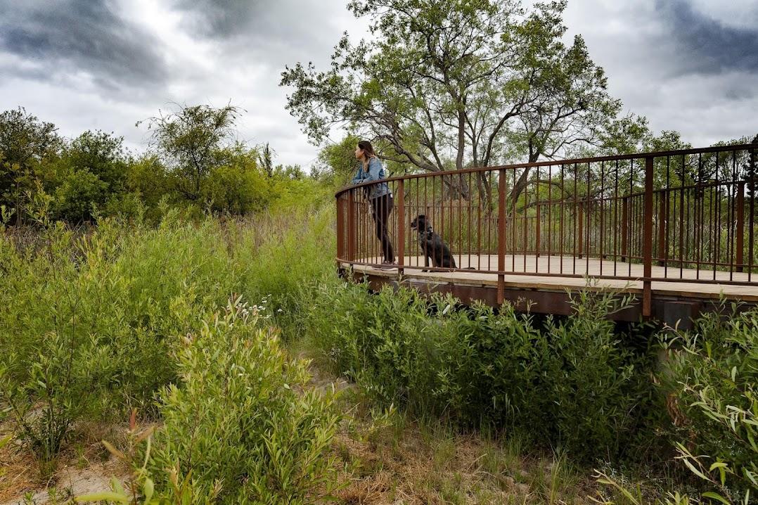 一人一狗在查爾斯頓保留盆地的展望台上。