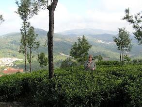 Photo: 7B220940 na plantacji herbaty