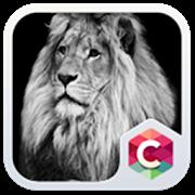 Black & White Lion Theme HD