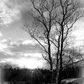 Little Tree by Elisabeth Sjåvik Monsen - Black & White Landscapes ( winter, nature, black and white, arctic, norway,  )