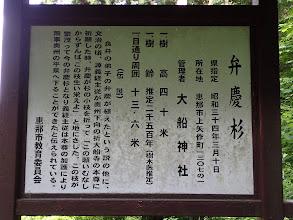 弁慶杉の説明文