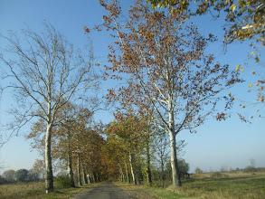 Photo: Kopaszodnak a fák