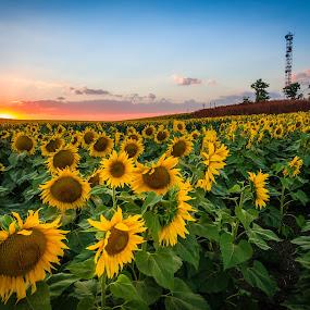 lighthouse sunset by Lupu Radu - Landscapes Sunsets & Sunrises ( black sea, sunset, lighthouse, sunflower, tuzla, , #8rtcoMagazine )