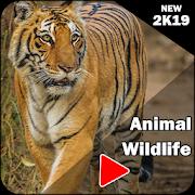 Natural Geographic Animals Wildlife Videos