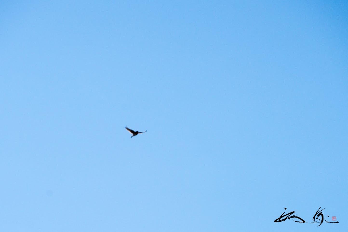 大空を飛び回る鳥さん。。。