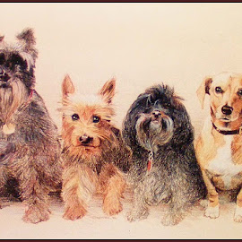 Four in a Row by Dennis Kemper - Drawing All Drawing ( dogs, pet, color pencil, dog portrait, drawing )