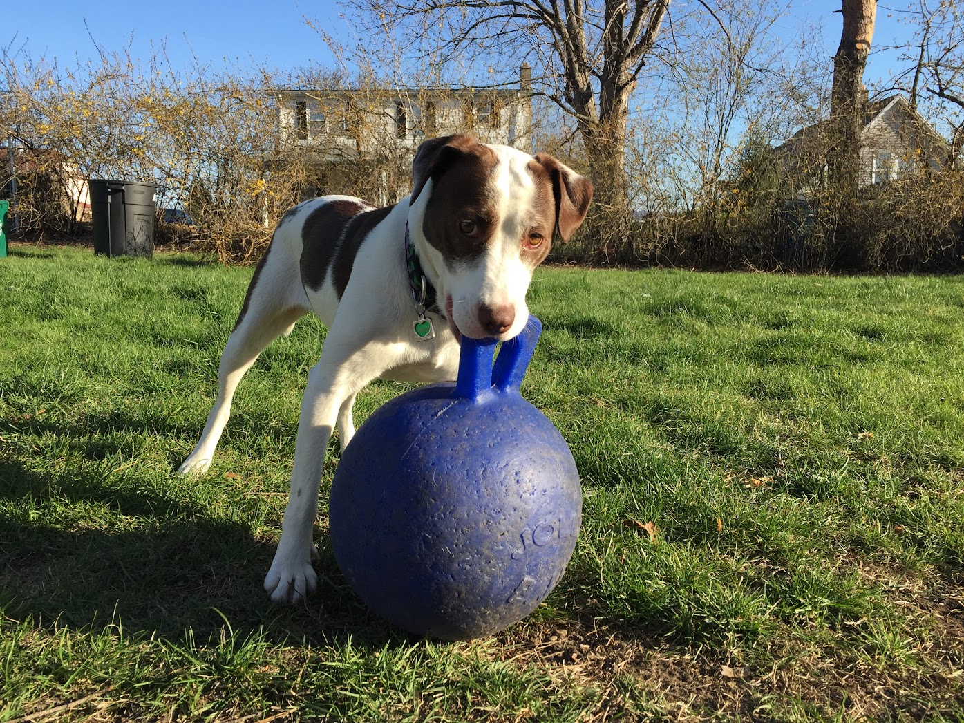 Sally's Puppy Toy Picks - Jolly Ball