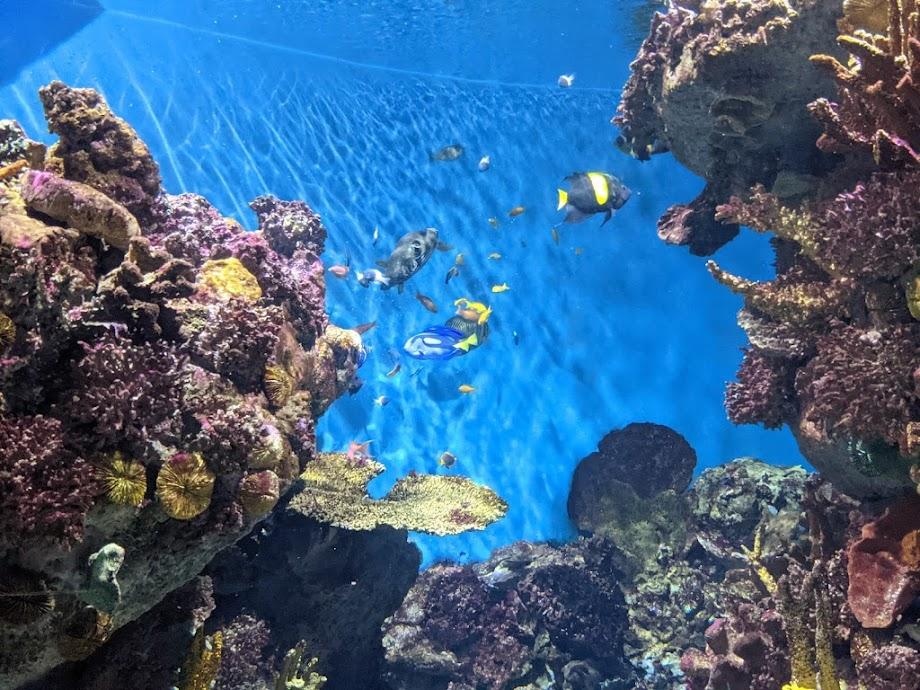 Foto Aquarium - El Acuario de Barcelona 14