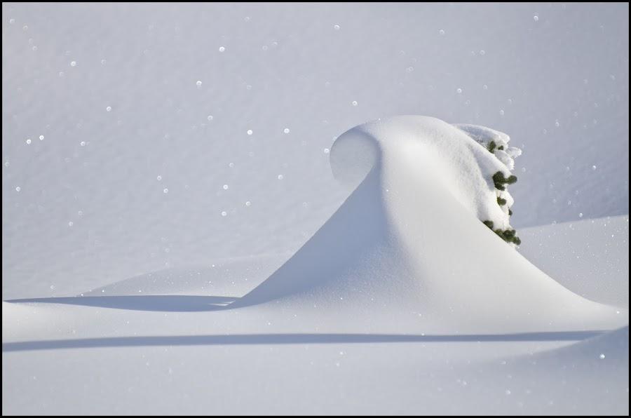 Surf's up. by Dustin Penman - Nature Up Close Trees & Bushes ( washington, dustin, mt. rainier, state, paradise, penman )