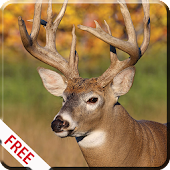 Download Deer Hunting Calls APK for Android Kitkat