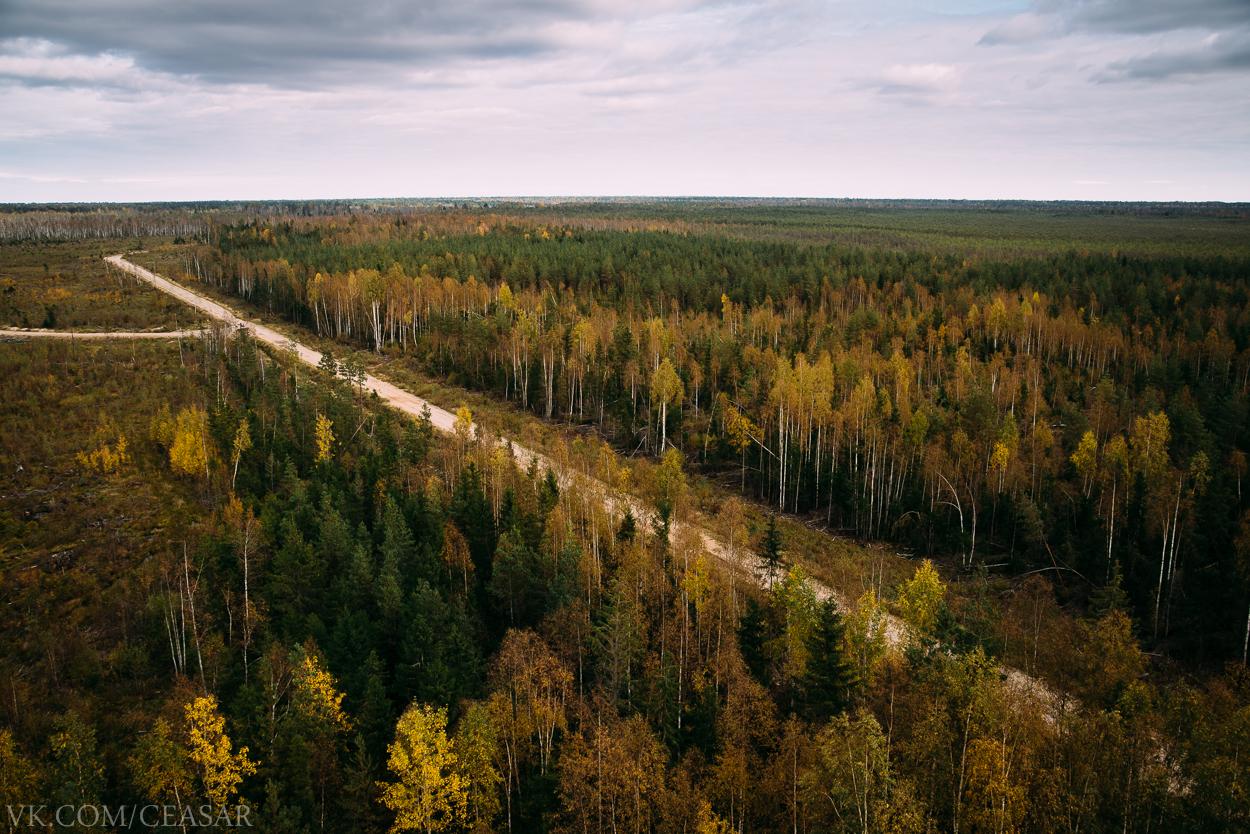 Дорога на танковом полигоне