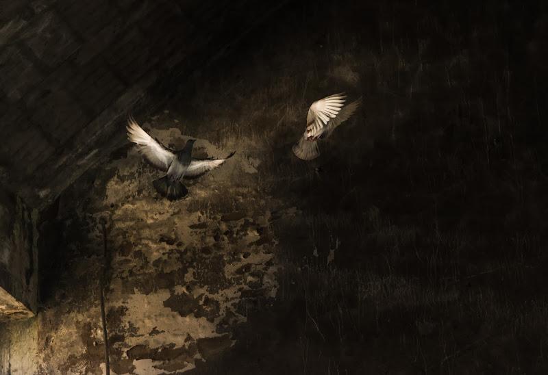 Flying Rats di Rino Lio