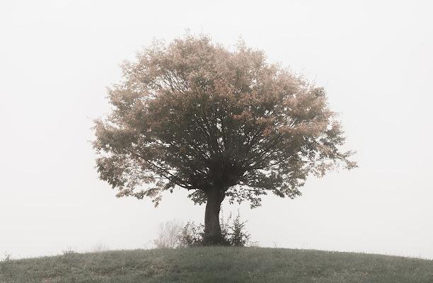 Nella nebbia e nel sogno di giacomobe