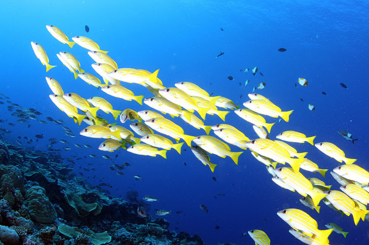 Blue Corner Wall, Palau Micronesia (25 Best Dive Sites in the World to Put on Your Bucket List).