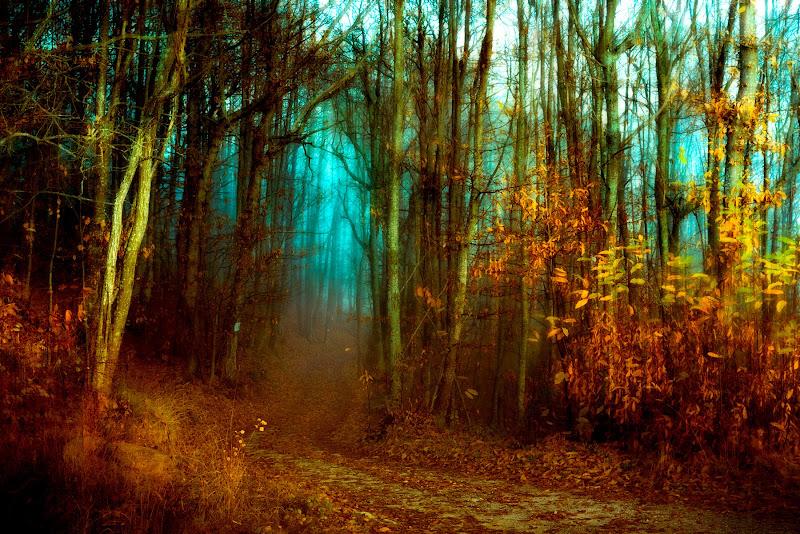 Solo nel bosco di Ivan Bertusi