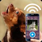 Tease the dog sound icon