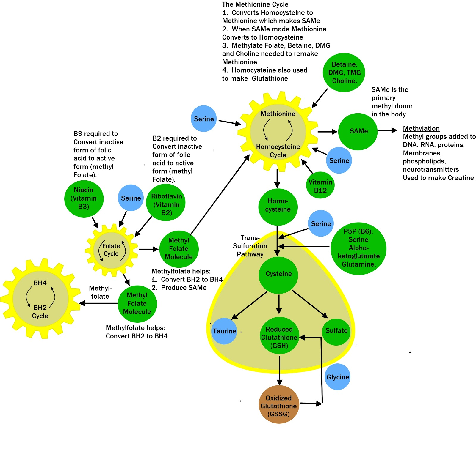 Commonly Disrupted Metabolic Pathways 2 - 2 of 2.jpg