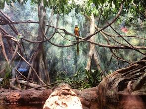 Photo: pretty bird