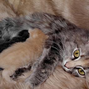 Feeding time by Ricky Friskilæ - Animals - Cats Portraits ( cat, feeding, kittens, hungry, norway )