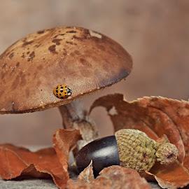 by Ksenija Glavak - Nature Up Close Mushrooms & Fungi