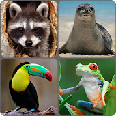 Animals Memory Game Android APK Download Free By West Apps