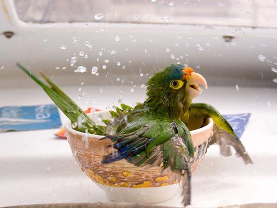 bathing parrot.jpg