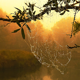 A Web on a Foggy Morning by Dee Haun - Nature Up Close Webs ( orange, webs, foggy morning, 171205t1827cd6, branch, reflections, nature up close, iphone se, glow,  )