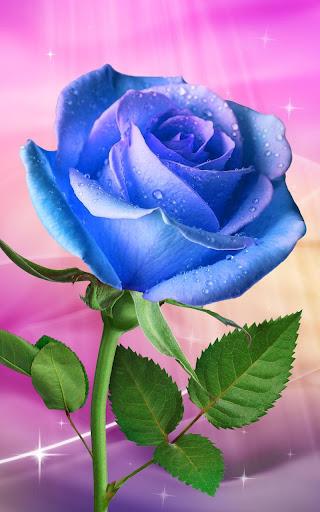 Rose. Magic Touch Flowers screenshots 2