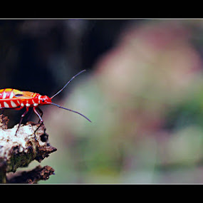 I Am Orange by Enggus Fatriyadi - Animals Insects & Spiders