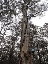 Photo: Diamond tree
