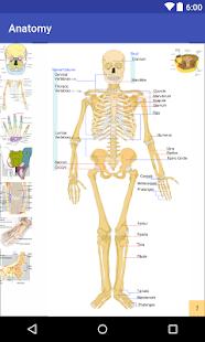 Easy Anatomy - náhled