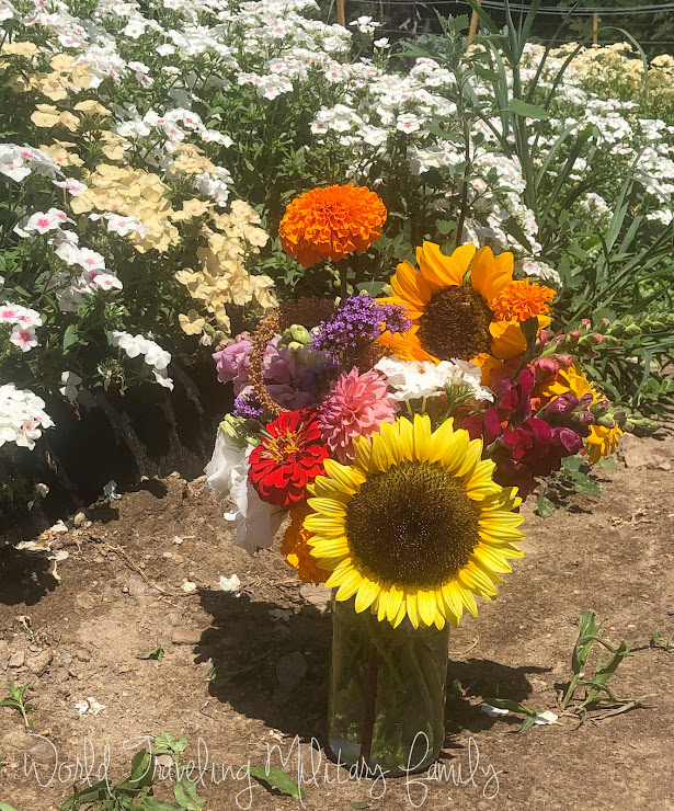 Ferjulian's farm - pick your own flowers
