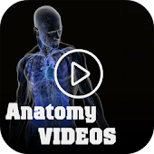 Medical Anatomy Videos