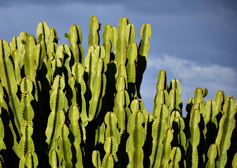 Cereus Tetragonus e cielo di Iky