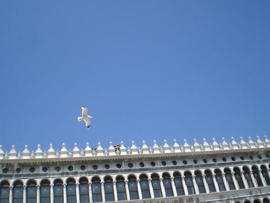 Gabbiano a Venezia di A.Monte