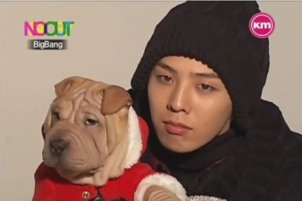 gdragon sharpei dogs 01