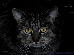 Photo: Eddi - die Katze vom Birkhof